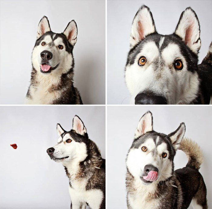 adopted-dog-teton-pitbull-humane-society-utah-27.jpg